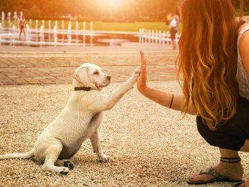 5 Pekerjaan yang Cocok Bagi Para Pecinta Hewan 21