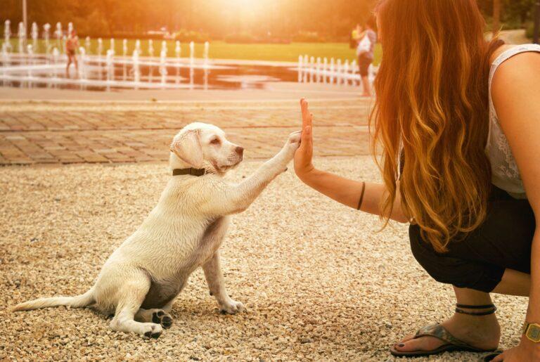 5 Pekerjaan yang Cocok Bagi Para Pecinta Hewan 1