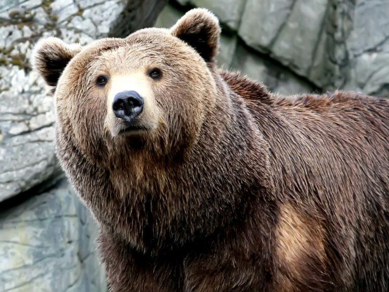 8 Jenis Beruang yang Tersisa di Dunia Saat Ini 1