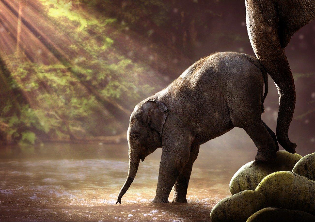 10 Hewan Paling Pintar Di Dunia Saat Ini 4