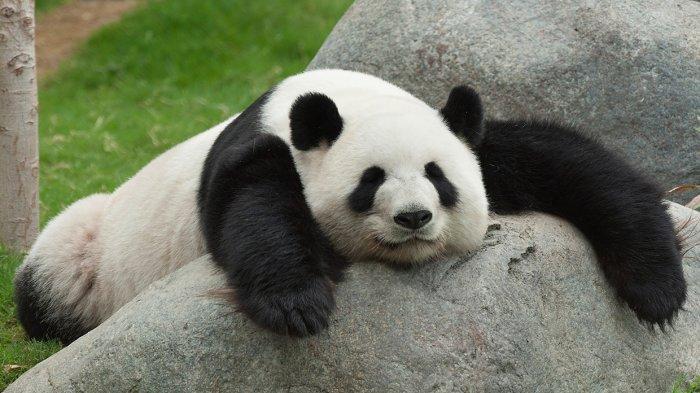 8 Jenis Beruang yang Tersisa di Dunia Saat Ini 5