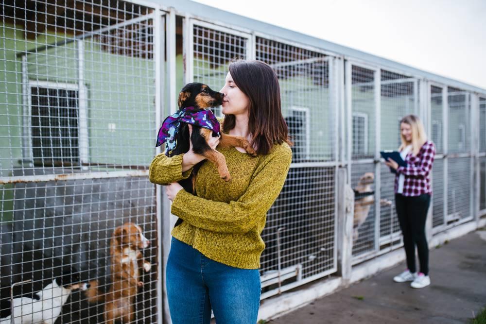 5 Pekerjaan yang Cocok Bagi Para Pecinta Hewan 5