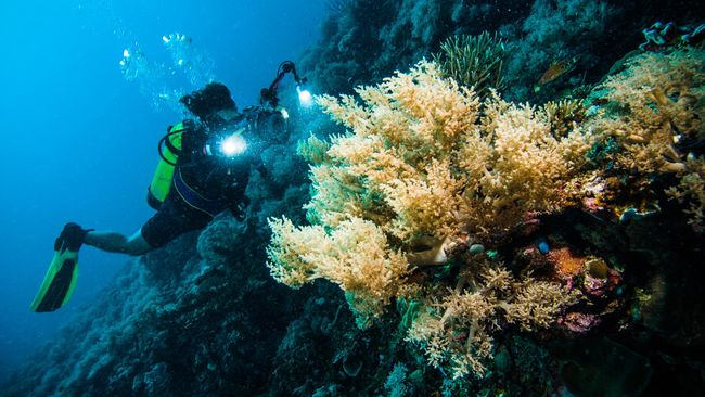 6 Tempat Menyelam Terbaik di Kepulauan Sulawesi 5