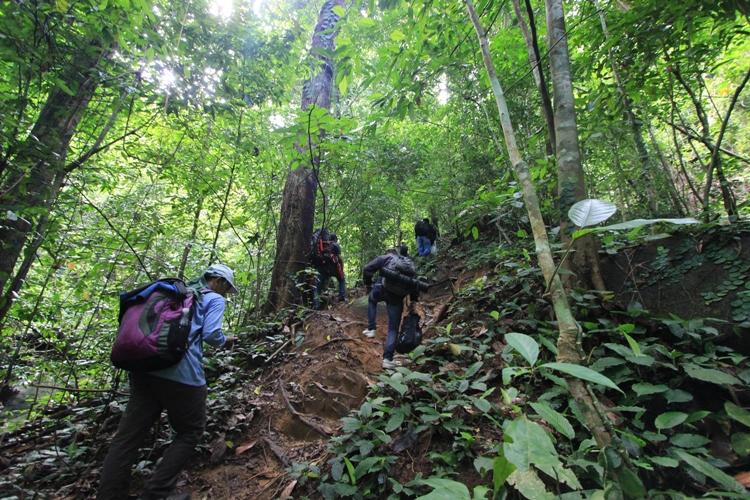 6 Hal Menarik yang Dapat Dilakukan di Taman Nasional Gunung Palung 7