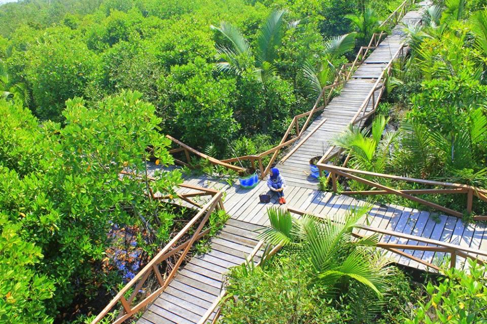 11 Wisata Hutan Mangrove yang Menarik di Indonesia 6
