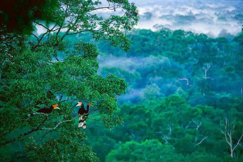 6 Hal Menarik yang Dapat Dilakukan di Taman Nasional Gunung Palung 3
