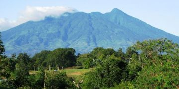6 Hal Menarik yang Dapat Dilakukan di Taman Nasional Gunung Palung 31