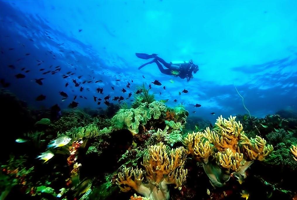 6 Tempat Menyelam Terbaik di Kepulauan Sulawesi 7
