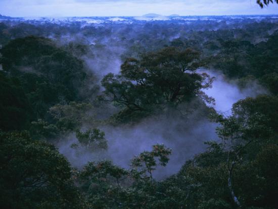 6 Hal Menarik yang Dapat Dilakukan di Taman Nasional Gunung Palung 9