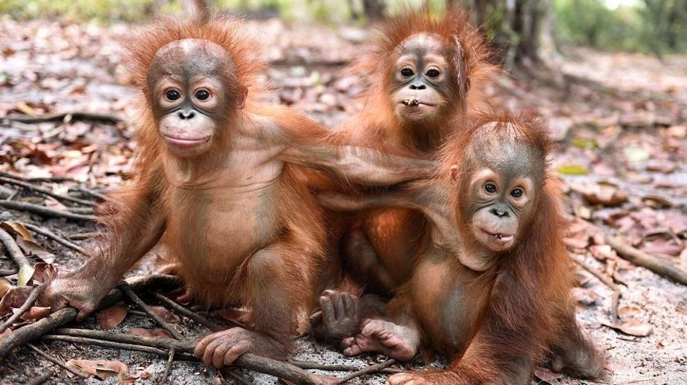 6 Hal Menarik yang Dapat Dilakukan di Taman Nasional Gunung Palung 5