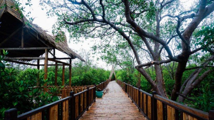 11 Wisata Hutan Mangrove yang Menarik di Indonesia 4