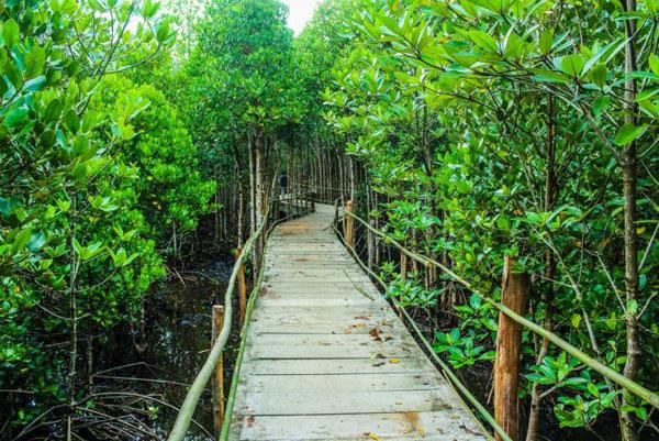11 Wisata Hutan Mangrove yang Menarik di Indonesia 5