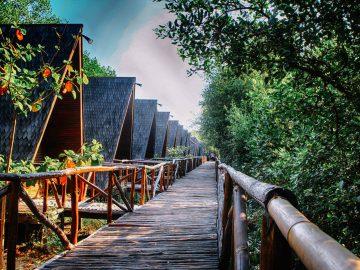 11 Wisata Hutan Mangrove yang Menarik di Indonesia 11