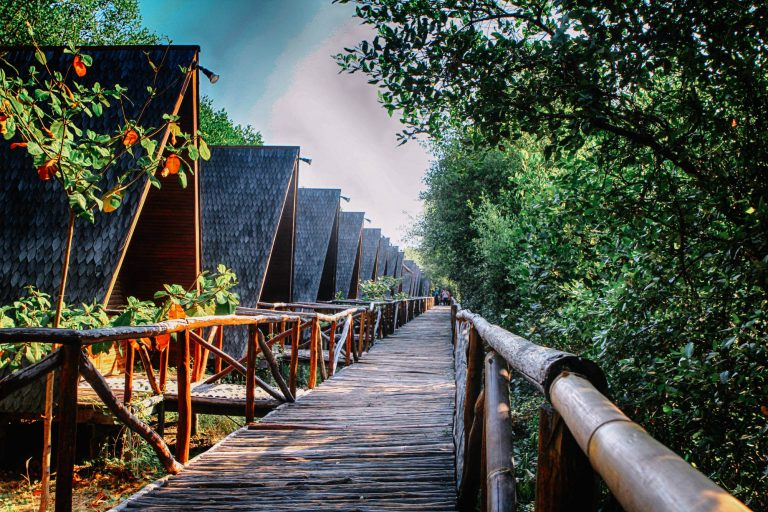 11 Wisata Hutan Mangrove yang Menarik di Indonesia 1