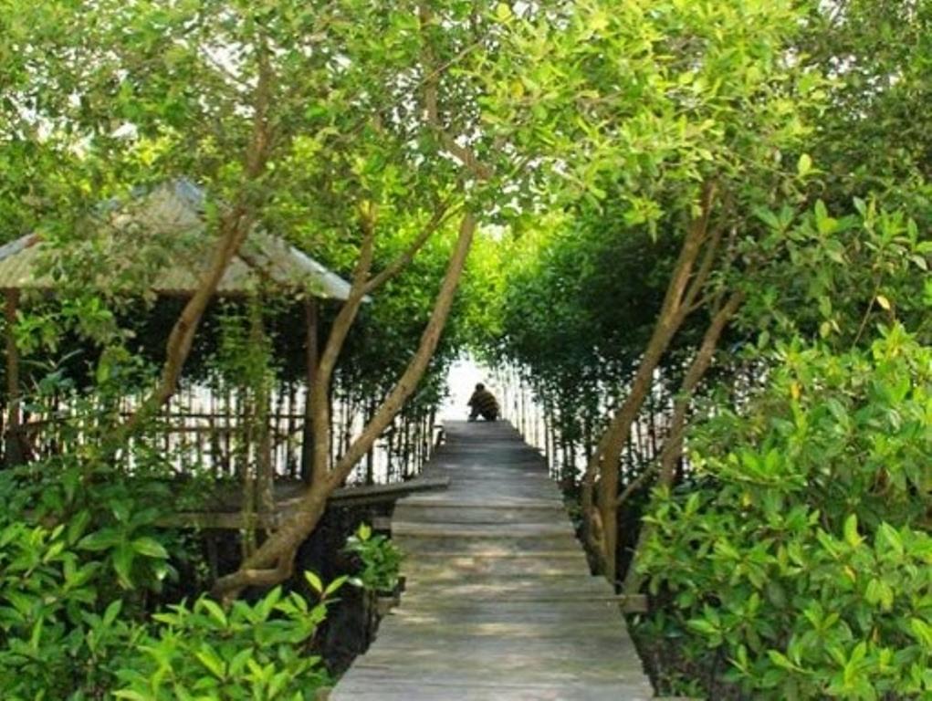 11 Wisata Hutan Mangrove yang Menarik di Indonesia 13