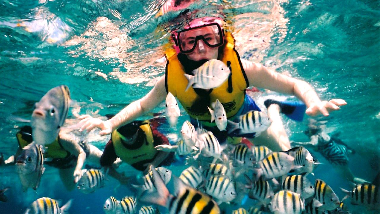 6 Tempat Menyelam Terbaik di Kepulauan Sulawesi 6