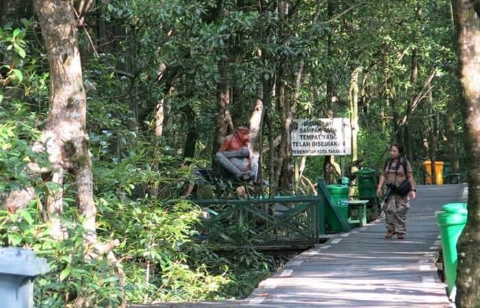 11 Wisata Hutan Mangrove yang Menarik di Indonesia 9