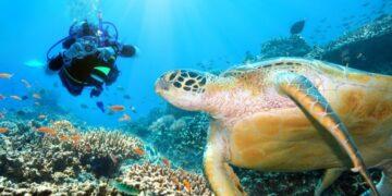 6 Tempat Menyelam Terbaik di Kepulauan Sulawesi 21