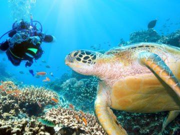 6 Tempat Menyelam Terbaik di Kepulauan Sulawesi 12