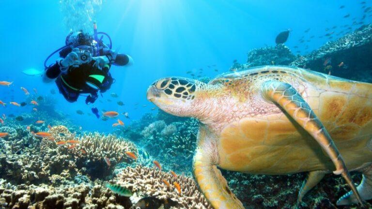6 Tempat Menyelam Terbaik di Kepulauan Sulawesi 1