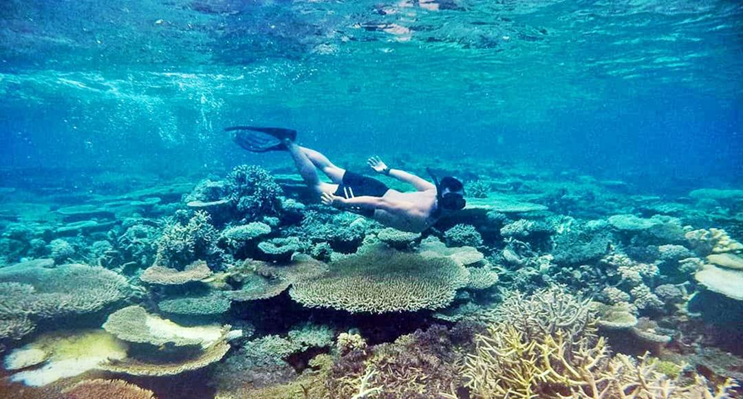 6 Tempat Menyelam Terbaik di Kepulauan Sulawesi 4