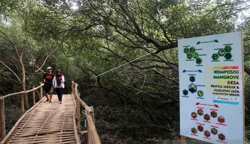 11 Wisata Hutan Mangrove yang Menarik di Indonesia 8