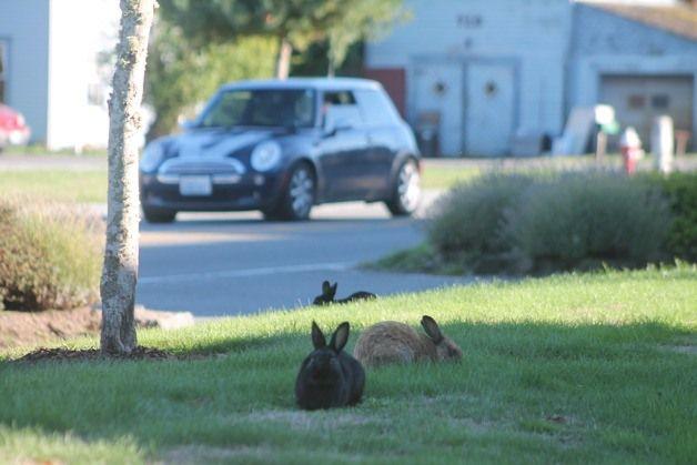 Kota Penuh Kelinci Hingga Smurf, Cobalah 9 Destinasi yang Aneh Ini 3
