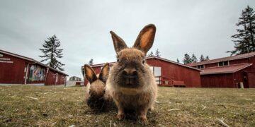 Kota Penuh Kelinci Hingga Smurf, Cobalah 9 Destinasi yang Aneh Ini 29