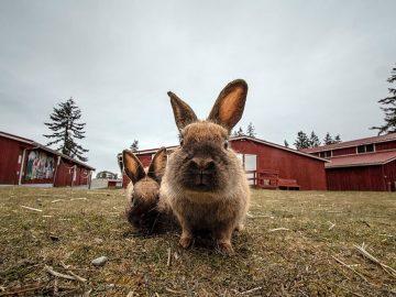 Kota Penuh Kelinci Hingga Smurf, Cobalah 9 Destinasi yang Aneh Ini 8