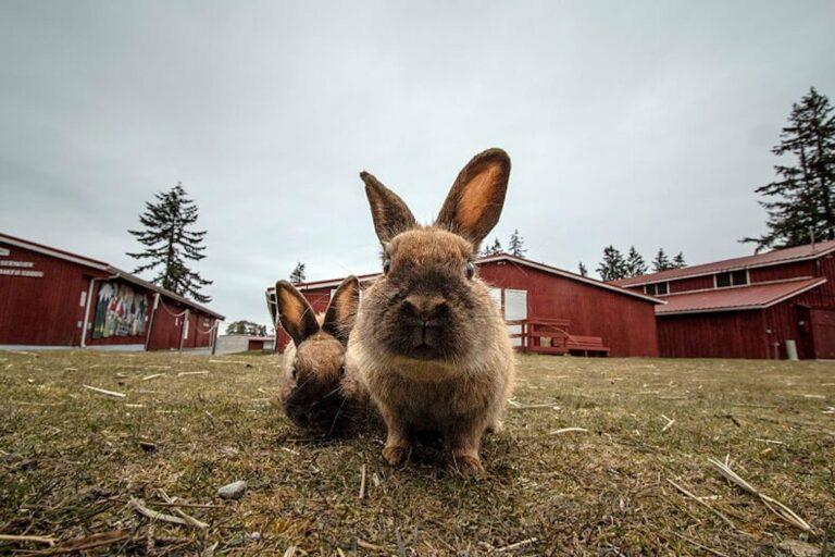 Kota Penuh Kelinci Hingga Smurf, Cobalah 9 Destinasi yang Aneh Ini 1