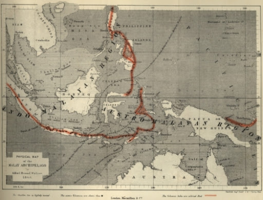 Wajah Fauna Nusantara Abad Silam Versi Wallace 3
