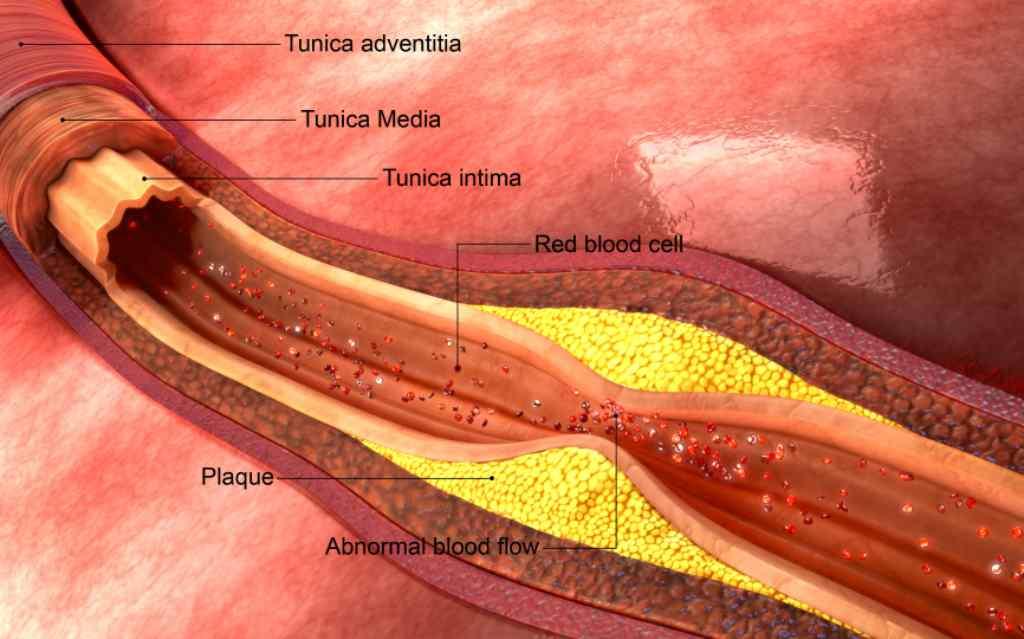 Memahami Sistem Peredaran Darah Yang Ada Pada Manusia 3