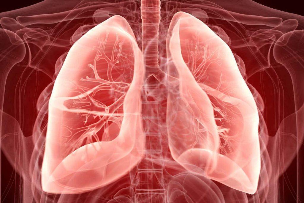 Organ Penting Dalam Sistem Ekskresi Pada Manusia 1