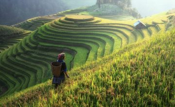 Pertanian Indonesia dalam Nadi Sejarah 1
