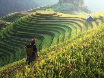 Pertanian Indonesia dalam Nadi Sejarah 3