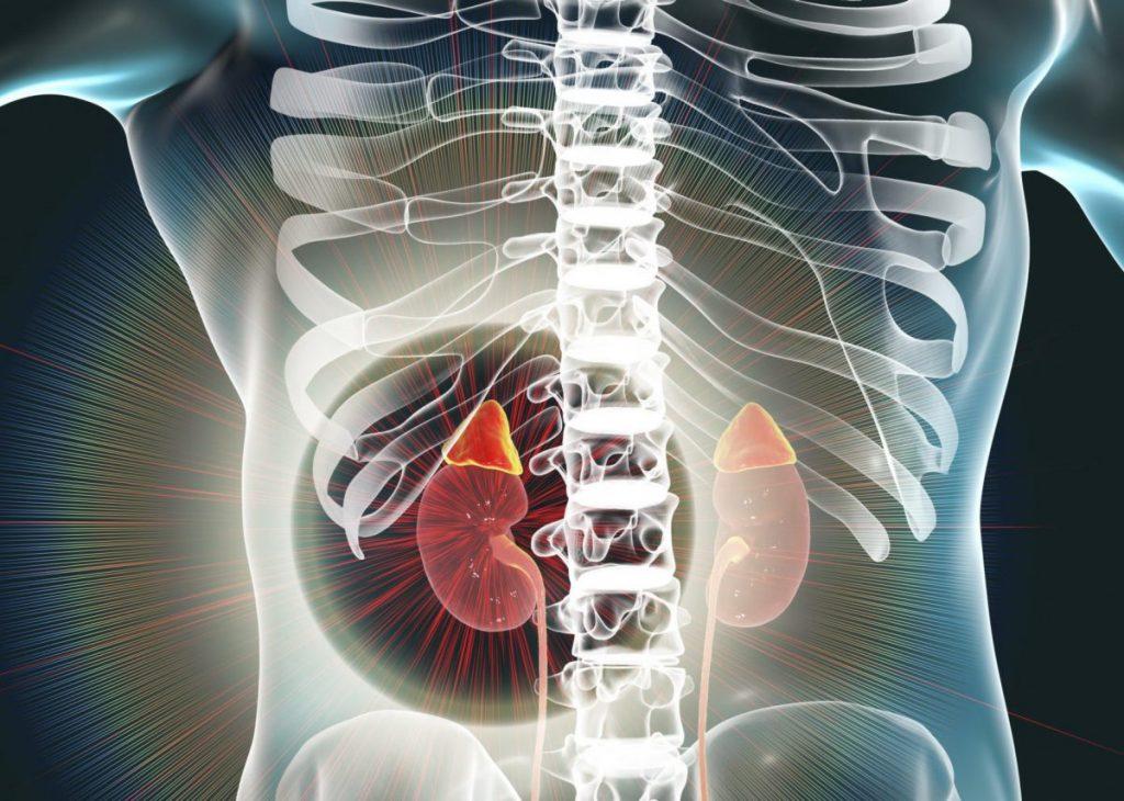 Organ Penting Dalam Sistem Ekskresi Pada Manusia 4