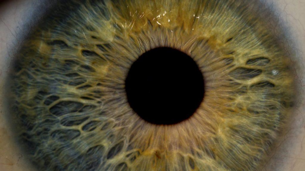 Bagian bagian Mata Manusia 2