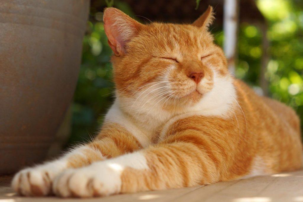 Cintai Kucing Kesayanganmu dengan Makanan Yang Sesuai Kebutuhannya 5
