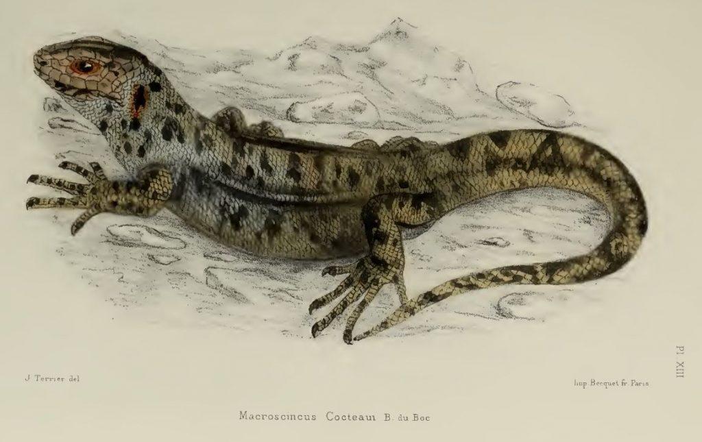 19 Spesies Reptile Yang Ternyata Sudah Punah 10