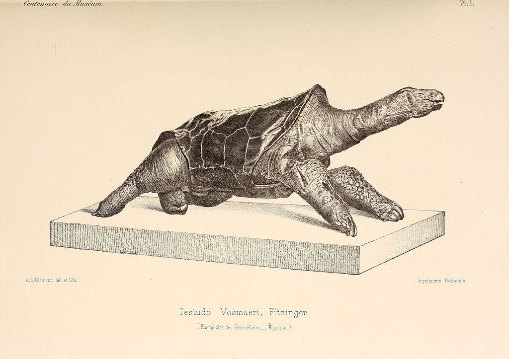 19 Spesies Reptile Yang Ternyata Sudah Punah 13