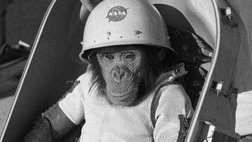 Sebelum Manusia, 14 Hewan Ini Lebih Dahulu Ke Luar Angkasa 14