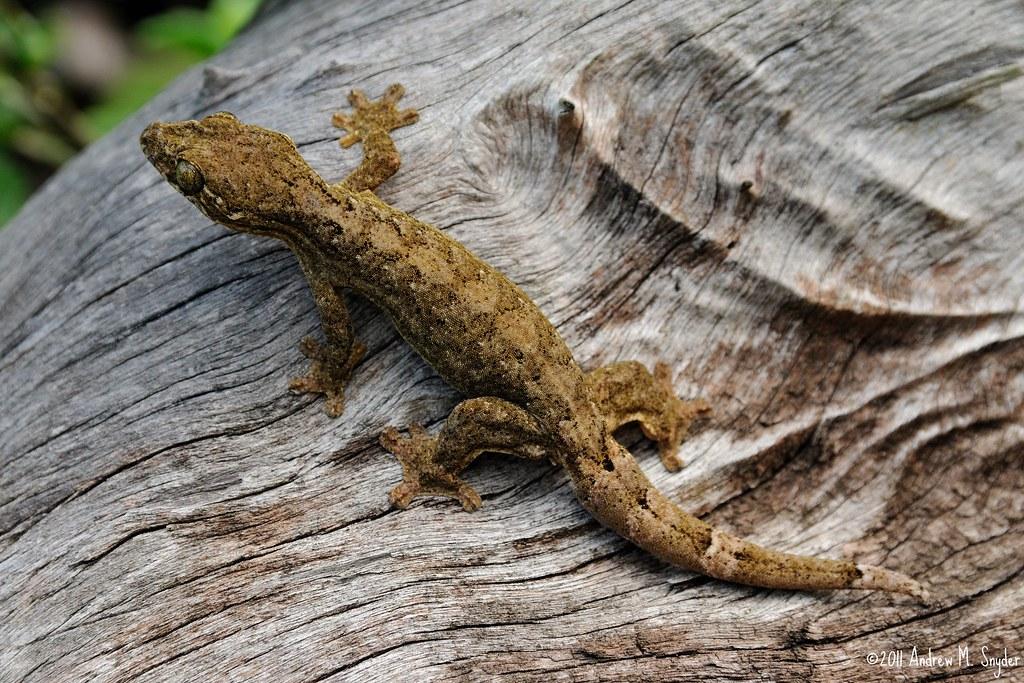 19 Spesies Reptile Yang Ternyata Sudah Punah 3