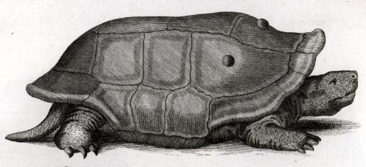 19 Spesies Reptile Yang Ternyata Sudah Punah 14