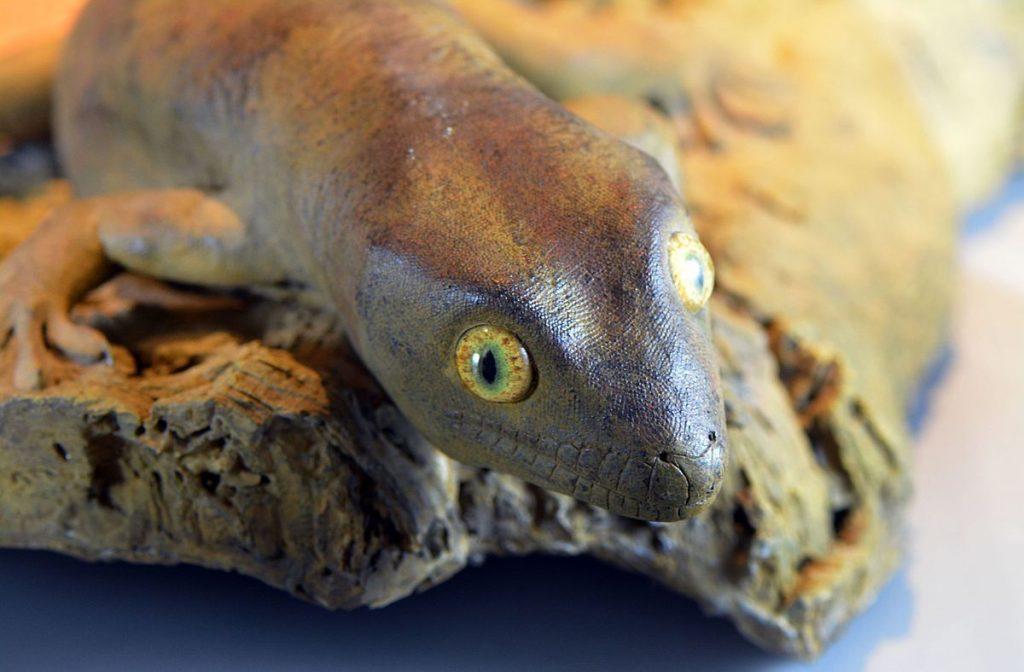 19 Spesies Reptile Yang Ternyata Sudah Punah 16