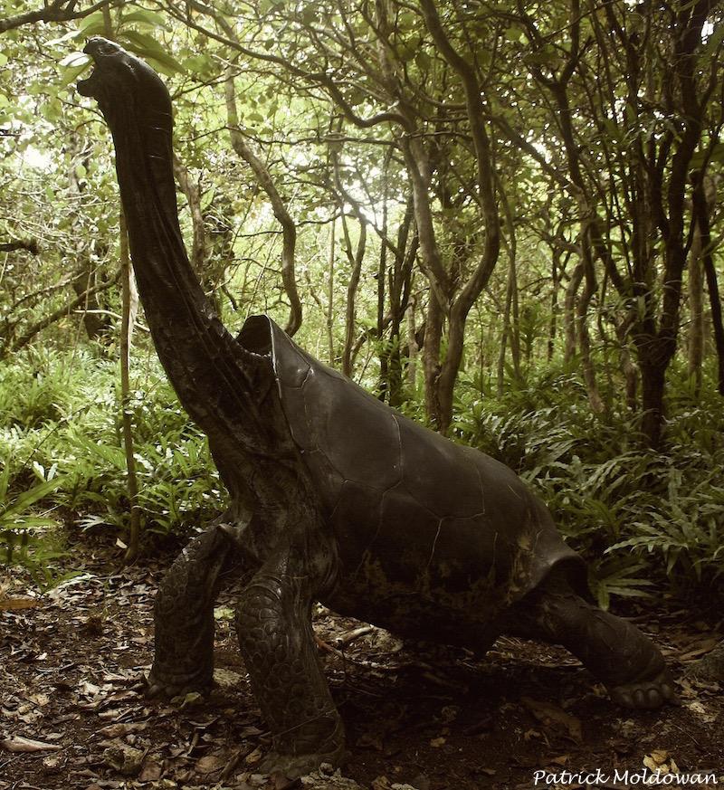 19 Spesies Reptile Yang Ternyata Sudah Punah 15