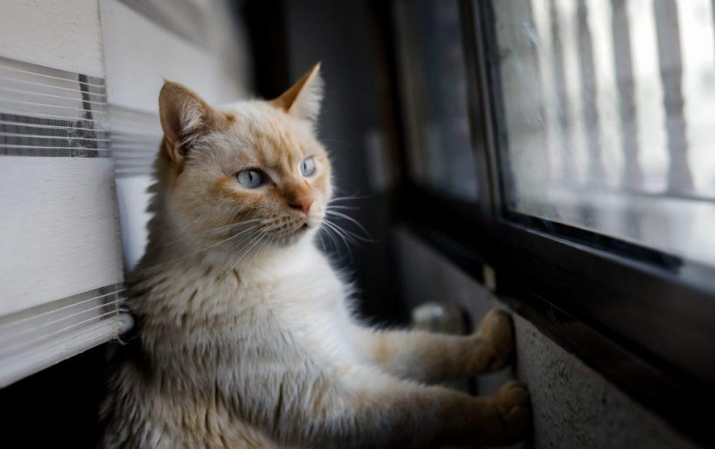 Cintai Kucing Kesayanganmu dengan Makanan Yang Sesuai Kebutuhannya 3