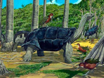 19 Spesies Reptile Yang Ternyata Sudah Punah 11