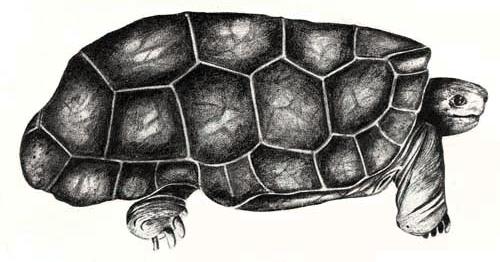 19 Spesies Reptile Yang Ternyata Sudah Punah 12