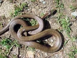 19 Spesies Reptile Yang Ternyata Sudah Punah 5