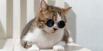 Cintai Kucing Kesayanganmu dengan Makanan Yang Sesuai Kebutuhannya 12